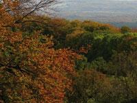 Exkursionen durch die Natur rund um Heidelberg und Ausflüge in Naturschutzgebiete. Wald- und Wiesenlehrgänge, Wildkräuter- und Waldmeisterspaziergänge.